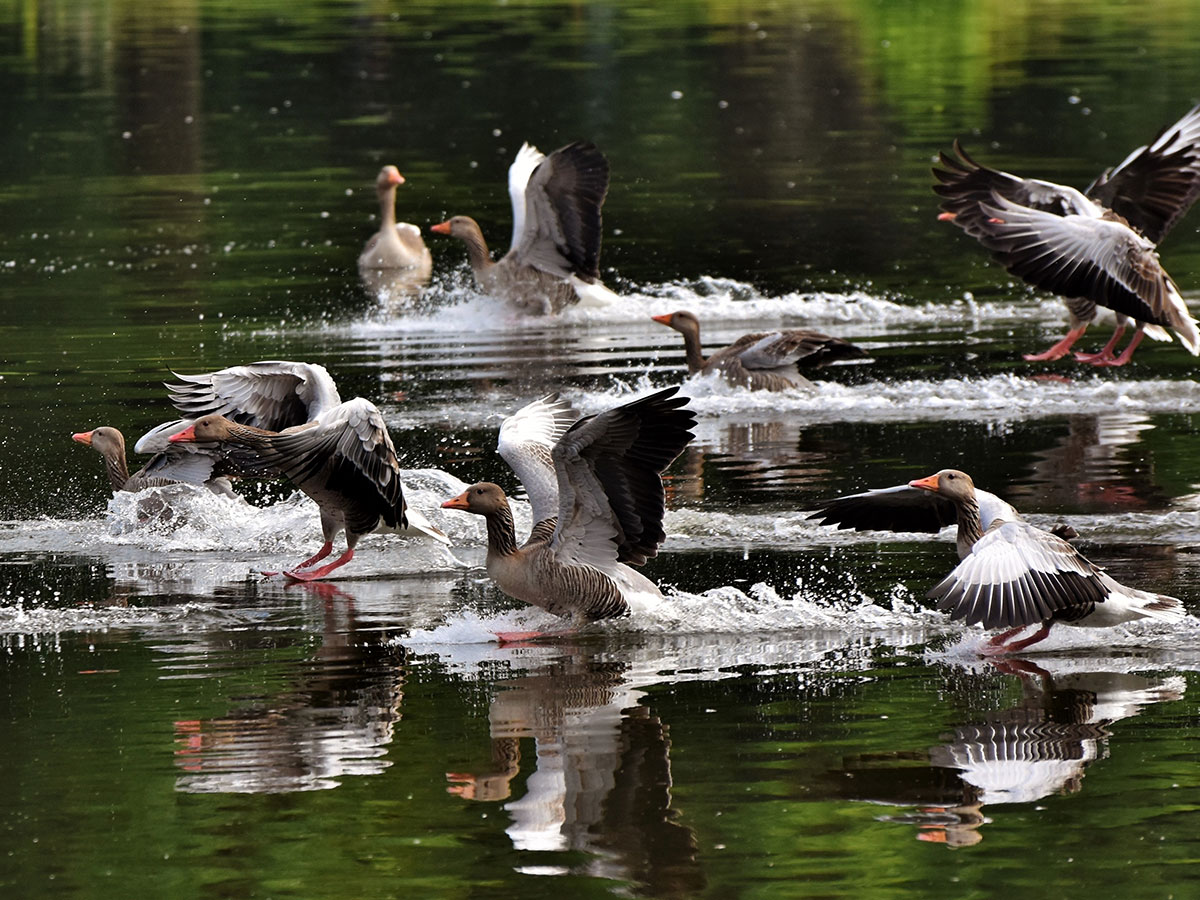 Naturpark Vrana See